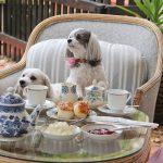 dogs enjoying afternoon tea.